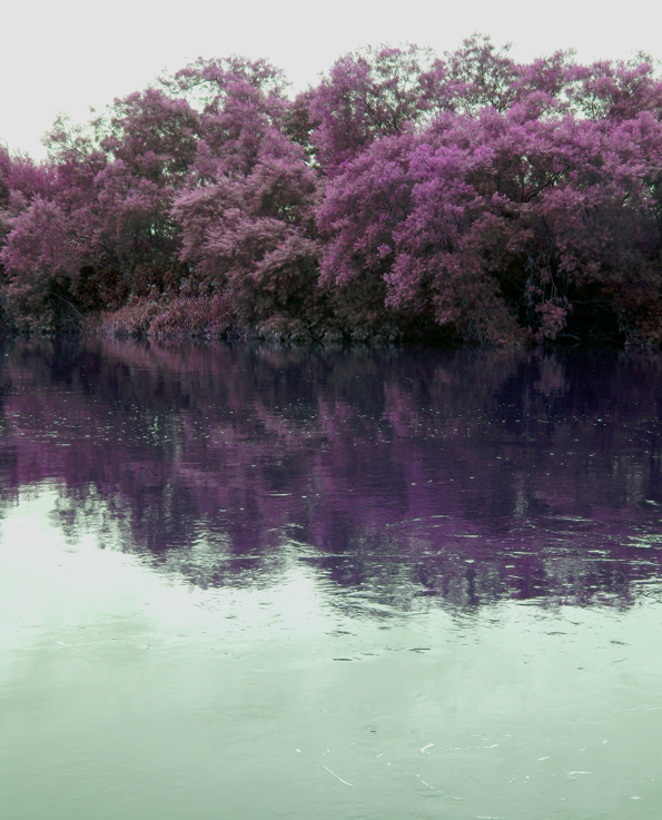 purple trees green river