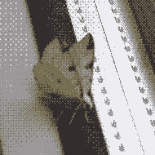 DSCF0742